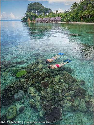 Guests snorkeling on the House Reef